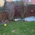 Gartenbeispiel 1 (vorher)